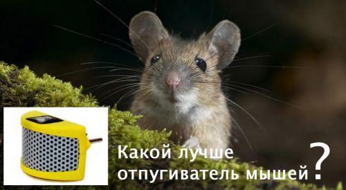 Ультразвуковой отпугиватель мышей какой лучше отзывы