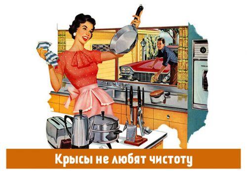 Крысы не любят чистоту